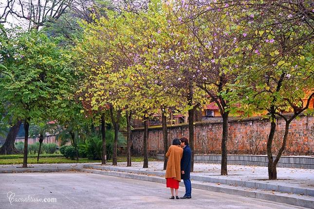 Hà Nội: Rủ bạn thân, gà bông chụp ngay bộ ảnh trên con đường hoa ban tím đẹp mơ màng ảnh 6