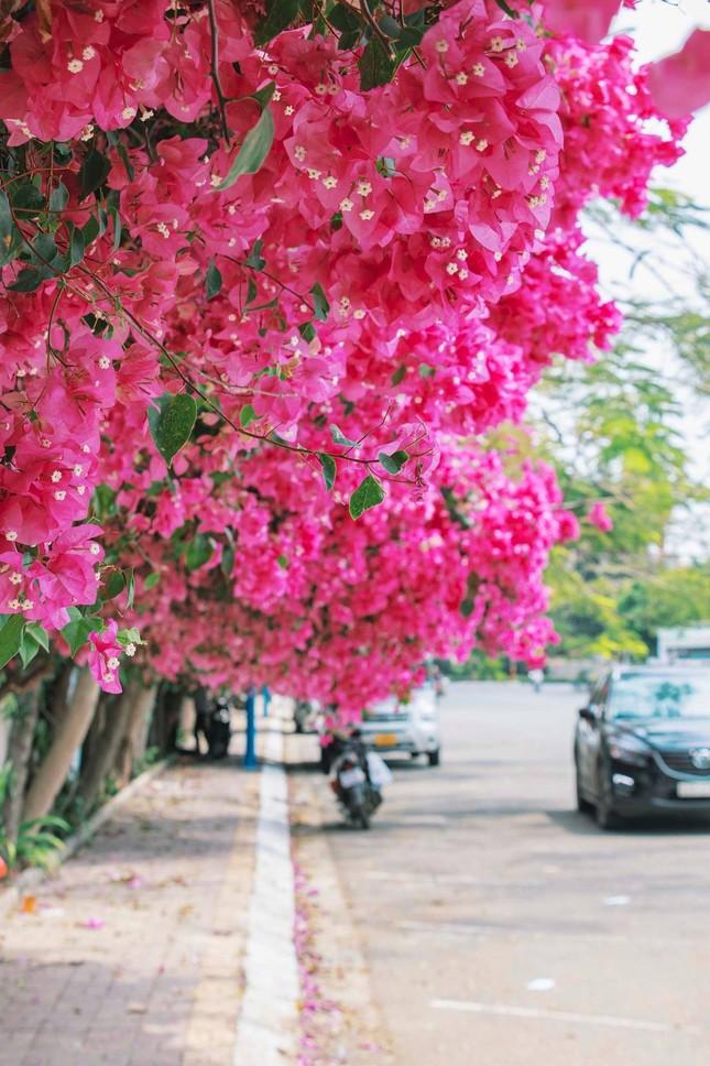Teen Vũng Tàu hẹn hò nhau đi chụp hình check-in tại con đường hoa giấy đẹp ná thở ảnh 3