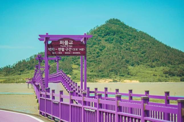 """Có gì hấp dẫn ở đảo Banwol - hòn đảo """"tím lịm tìm sim"""" ở phía Nam Hàn Quốc? ảnh 7"""
