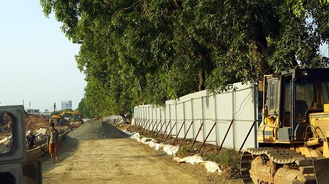 Con đường có 1300 cây xà cừ trong những ngày nắng nóng đỉnh điểm ảnh 3