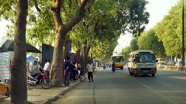 Con đường có 1300 cây xà cừ trong những ngày nắng nóng đỉnh điểm ảnh 7