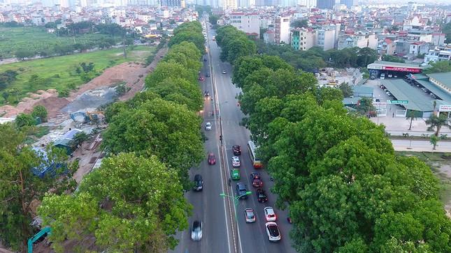 Con đường có 1300 cây xà cừ trong những ngày nắng nóng đỉnh điểm ảnh 10