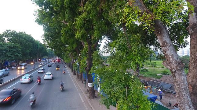 Con đường có 1300 cây xà cừ trong những ngày nắng nóng đỉnh điểm ảnh 11