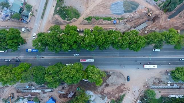 Con đường có 1300 cây xà cừ trong những ngày nắng nóng đỉnh điểm ảnh 12