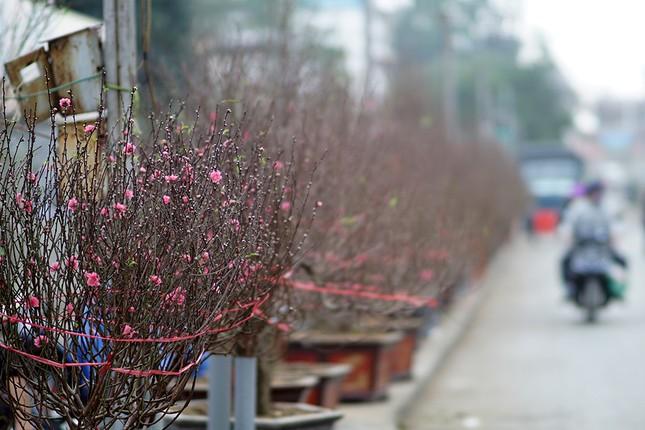 Đào Nhật Tân 'bung lụa' đón Tết sớm ở chợ hoa Hà Nội ảnh 16