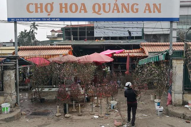 Đào Nhật Tân 'bung lụa' đón Tết sớm ở chợ hoa Hà Nội ảnh 1