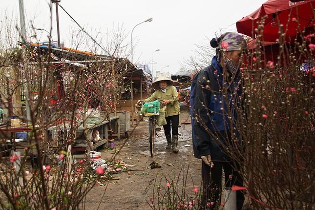 Đào Nhật Tân 'bung lụa' đón Tết sớm ở chợ hoa Hà Nội ảnh 2