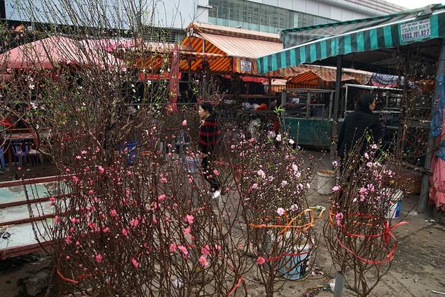 Đào Nhật Tân 'bung lụa' đón Tết sớm ở chợ hoa Hà Nội ảnh 3
