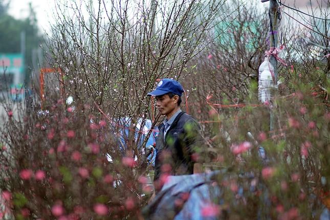 Đào Nhật Tân 'bung lụa' đón Tết sớm ở chợ hoa Hà Nội ảnh 7