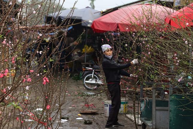 Đào Nhật Tân 'bung lụa' đón Tết sớm ở chợ hoa Hà Nội ảnh 8