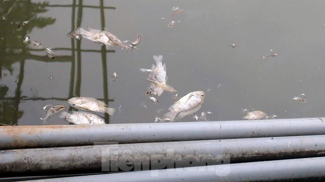 Toàn cảnh nhà máy nước sông Đà, nơi nguồn nước sạch cho Thủ đô đang bị đe dọa ảnh 9