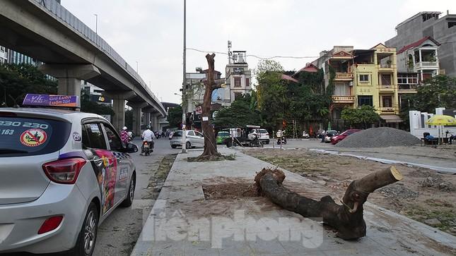 Chặt hạ 4 cây phượng vỹ lâu năm trên đường Hoàng Cầu ảnh 2