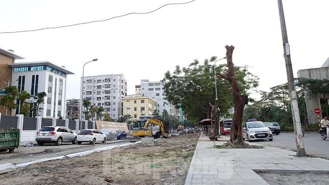 Chặt hạ 4 cây phượng vỹ lâu năm trên đường Hoàng Cầu ảnh 10