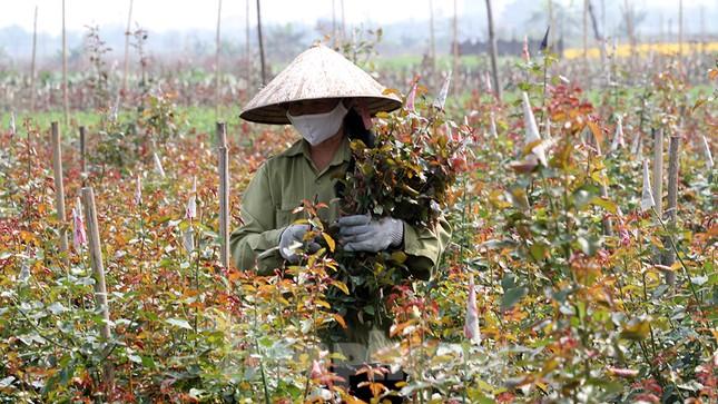 Cuộc sống trong thôn Hạ Lôi sau hơn mười ngày 'cấm cung' vì COVID-19 ảnh 8