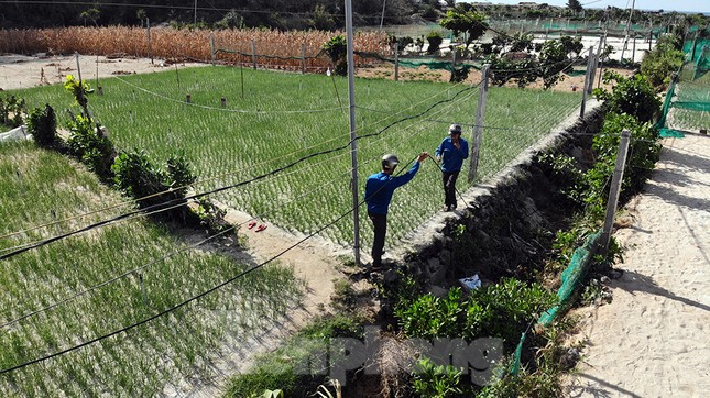 Đội nắng lắp đường truyền siêu tốc độ cho Tiền Phong Marathon ảnh 4
