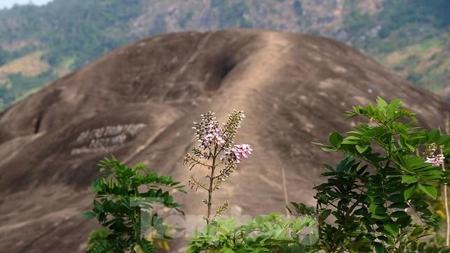 Tận thấy 'Đá Voi Mẹ' hùng vĩ giữa núi rừng Buôn Ma Thuột ảnh 2