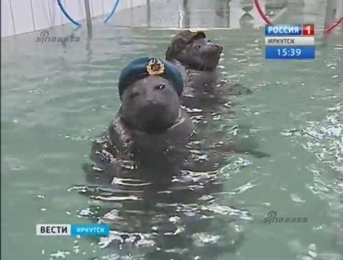 Lộ diện những chiến binh hải cẩu 'bảo bối' của quân đội Nga ảnh 8