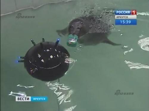 Lộ diện những chiến binh hải cẩu 'bảo bối' của quân đội Nga ảnh 9