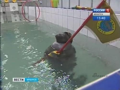 Lộ diện những chiến binh hải cẩu 'bảo bối' của quân đội Nga ảnh 10