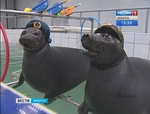 Lộ diện những chiến binh hải cẩu 'bảo bối' của quân đội Nga ảnh 2