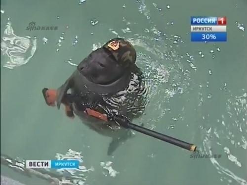 Lộ diện những chiến binh hải cẩu 'bảo bối' của quân đội Nga ảnh 3