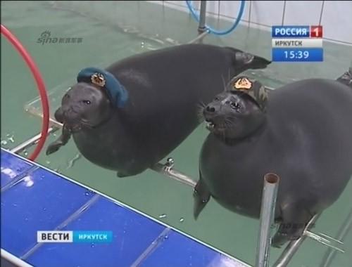 Lộ diện những chiến binh hải cẩu 'bảo bối' của quân đội Nga ảnh 1