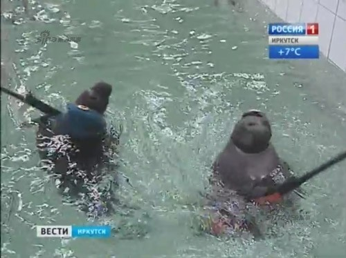 Lộ diện những chiến binh hải cẩu 'bảo bối' của quân đội Nga ảnh 4