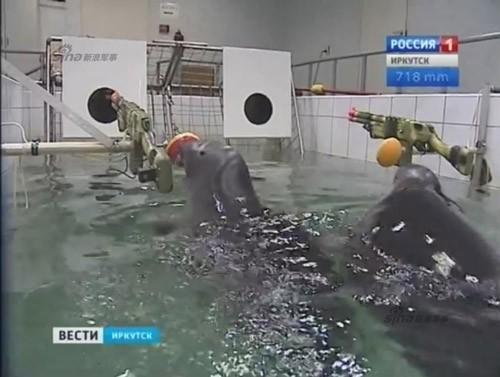Lộ diện những chiến binh hải cẩu 'bảo bối' của quân đội Nga ảnh 5