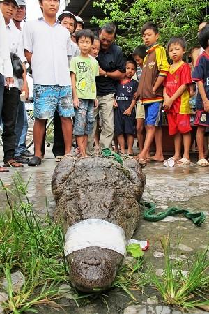 Cá sấu 'khủng' sổng chuồng, dân cả vùng chết khiếp ảnh 1