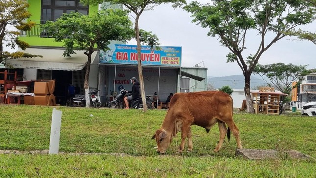 Giá đất tăng, ki-ốt bất động sản Đà Nẵng đồng loạt mở cửa lại ảnh 4