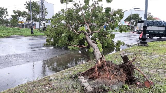 Mưa gió ào ào, cây bật gốc ngổn ngang ở Đà Nẵng ảnh 5