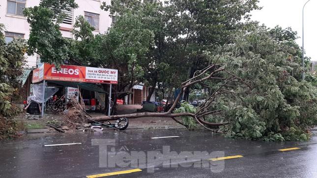 Mưa gió ào ào, cây bật gốc ngổn ngang ở Đà Nẵng ảnh 2