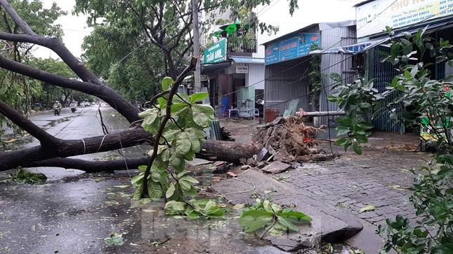 Mưa gió ào ào, cây bật gốc ngổn ngang ở Đà Nẵng ảnh 7