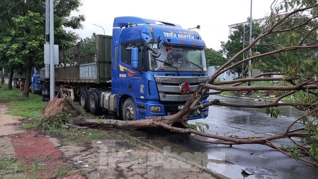 Mưa gió ào ào, cây bật gốc ngổn ngang ở Đà Nẵng ảnh 4