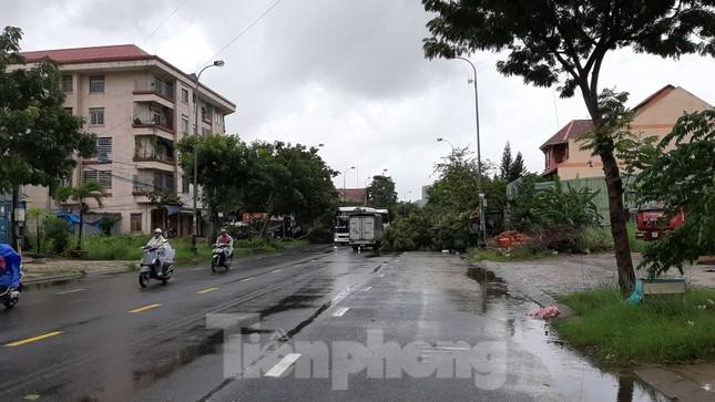 Mưa gió ào ào, cây bật gốc ngổn ngang ở Đà Nẵng ảnh 3