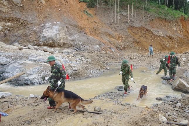Chó nghiệp vụ xác định nhiều vị trí nghi ngờ có thi thể mất tích ở Trà Leng ảnh 1