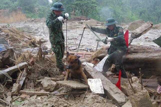 Chó nghiệp vụ xác định nhiều vị trí nghi ngờ có thi thể mất tích ở Trà Leng ảnh 4