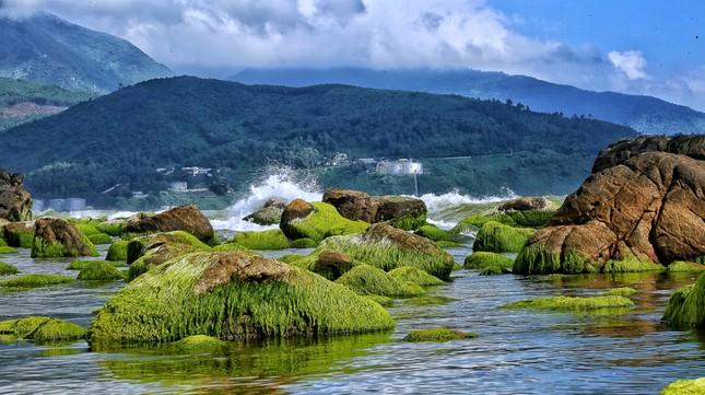 Ấn tượng loạt ảnh về môi trường và đa dạng sinh học Đà Nẵng ảnh 18