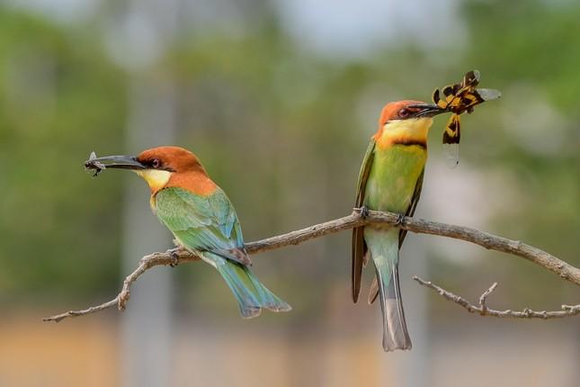 Ấn tượng loạt ảnh về môi trường và đa dạng sinh học Đà Nẵng ảnh 15