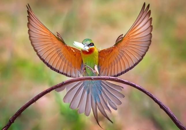 Ấn tượng loạt ảnh về môi trường và đa dạng sinh học Đà Nẵng ảnh 10