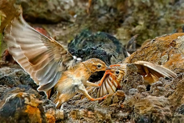 Ấn tượng loạt ảnh về môi trường và đa dạng sinh học Đà Nẵng ảnh 11