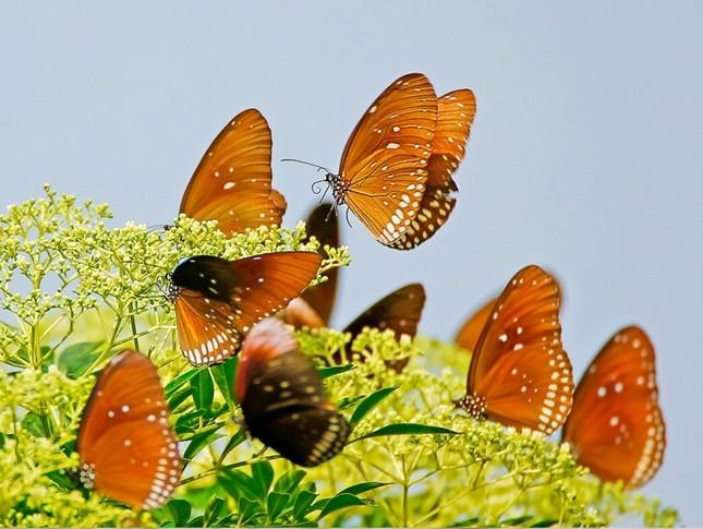Ấn tượng loạt ảnh về môi trường và đa dạng sinh học Đà Nẵng ảnh 17