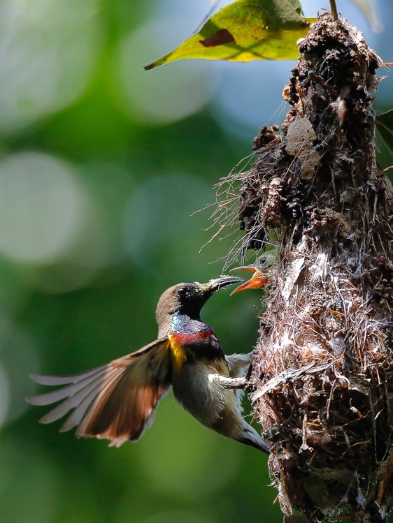 Ấn tượng loạt ảnh về môi trường và đa dạng sinh học Đà Nẵng ảnh 13