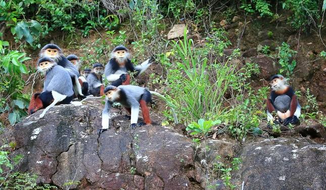 Ấn tượng loạt ảnh về môi trường và đa dạng sinh học Đà Nẵng ảnh 6