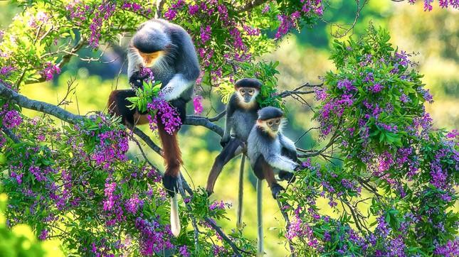 Ấn tượng loạt ảnh về môi trường và đa dạng sinh học Đà Nẵng ảnh 7