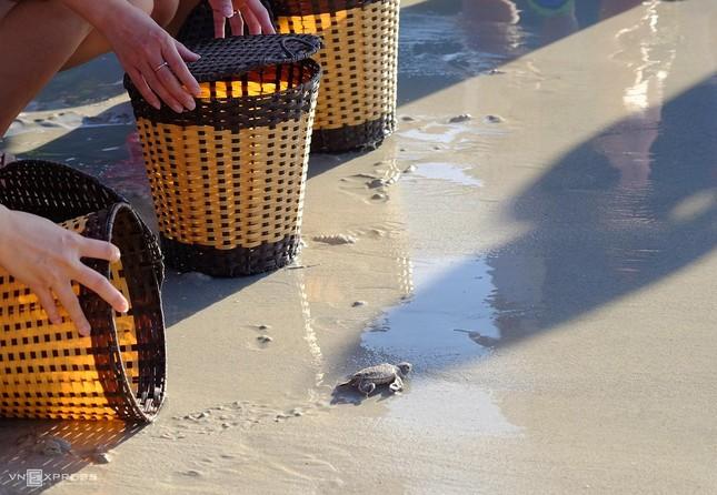 """Chèo thuyền vớt rác, bảo vệ rùa biển - vừa khám phá thiên nhiên vừa """"giải cứu"""" thế giới ảnh 4"""