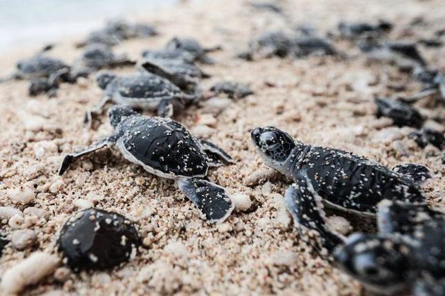 """Chèo thuyền vớt rác, bảo vệ rùa biển - vừa khám phá thiên nhiên vừa """"giải cứu"""" thế giới ảnh 5"""