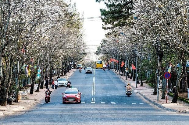 Đà Lạt lắp đặt đèn giao thông: Phải hy sinh nét văn hóa riêng vì du khách ngày càng đông? ảnh 5