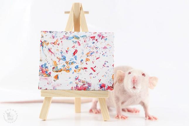 Trời ơi tin được không, tác giả của những bức tranh nghệ thuật này lại là một chú chuột ảnh 2