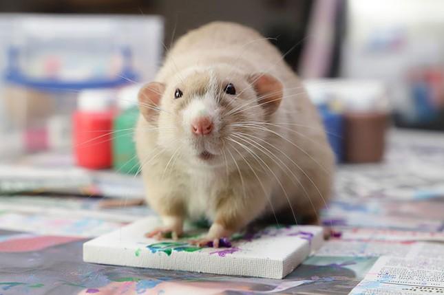 Trời ơi tin được không, tác giả của những bức tranh nghệ thuật này lại là một chú chuột ảnh 4